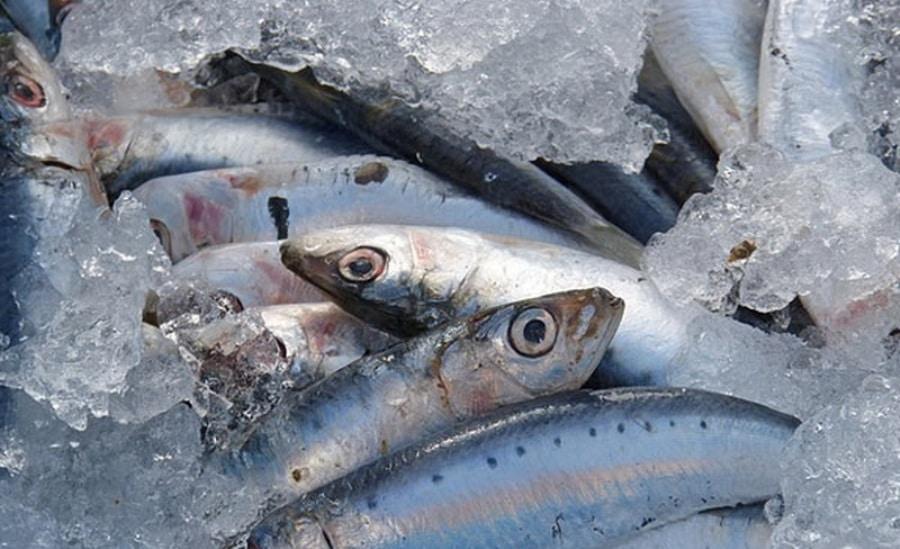 Ibu Hamil Tak Boleh Makan Ikan, Mitos atau Fakta